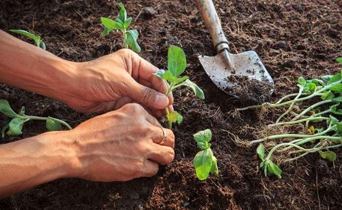 ΕΛΣΤΑΤ: Άνοδος 0,9% των τιμών εκροών στην γεωργία-κτηνοτροφία
