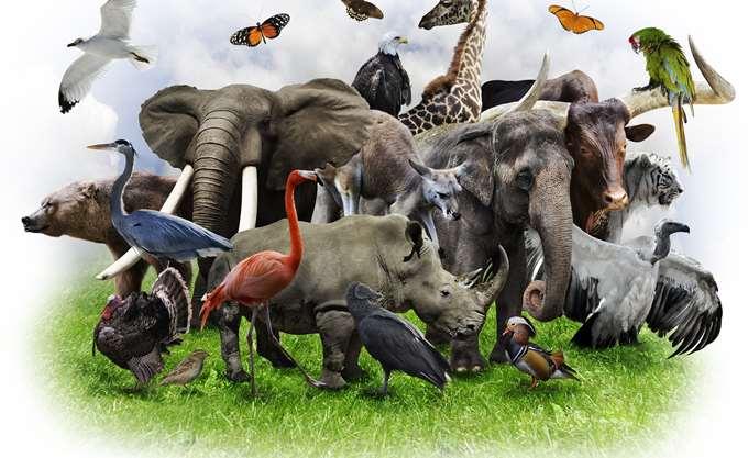 WWF: Ο πλανήτης μας έχασε το 60% του πληθυσμού των άγριων ζώων σε διάστημα 40 ετών