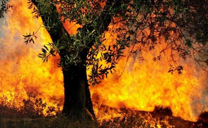 Πυρκαγιά κοντά στο Τσερνόμπιλ