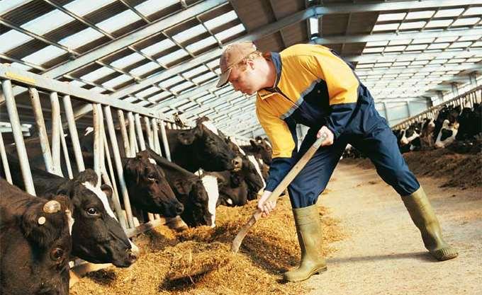 ΣΕΒΙΖ: Πρωτοβουλία συσπείρωσης όλων των εμπλεκομένων στον κλάδο της κτηνοτροφίας