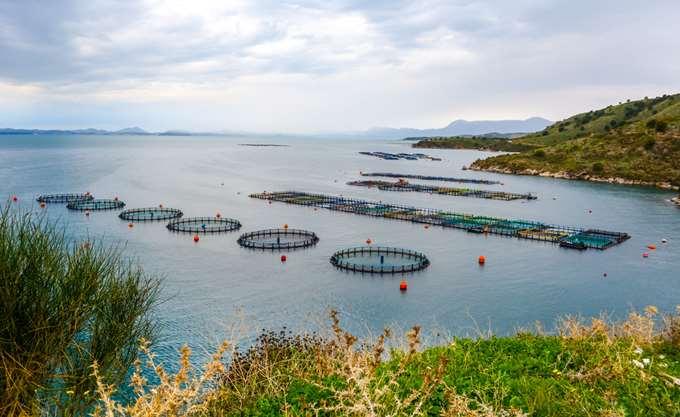 Νηρέας: Διεύρυνση ζημιών στα €13,6 εκατ. το α' εξάμηνο του 2018