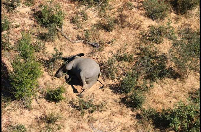 mpotsouana-nekroi-elefantes